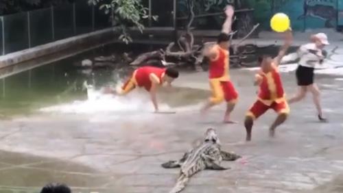 Thanh niên hốt hoảng khi biểu diễn cùng cá sấu