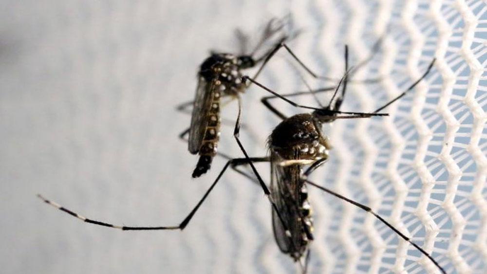 Số ca nhiễm virus Zika tại Ấn Độ tăng mạnh