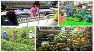 Sẽ xóa bỏ trên 99% thuế quan với hàng hóa giao thương giữa Việt Nam - EU