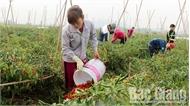 Việt Yên: Đồng rộng, thu nhập cao