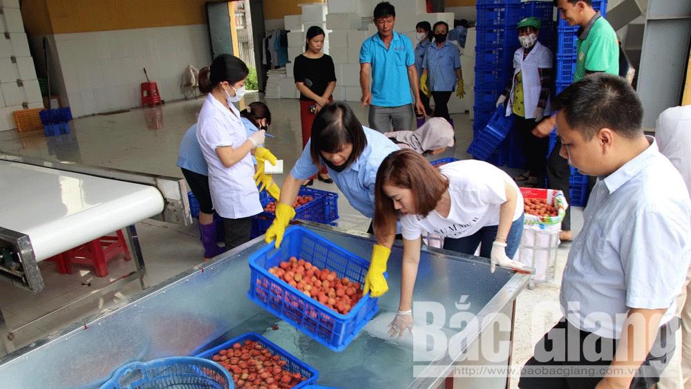 Thành lập mới 16 tổ liên kết  sản xuất và tiêu thụ nông sản