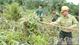 Phòng, chống cháy rừng mùa khô: Xác định vùng trọng điểm