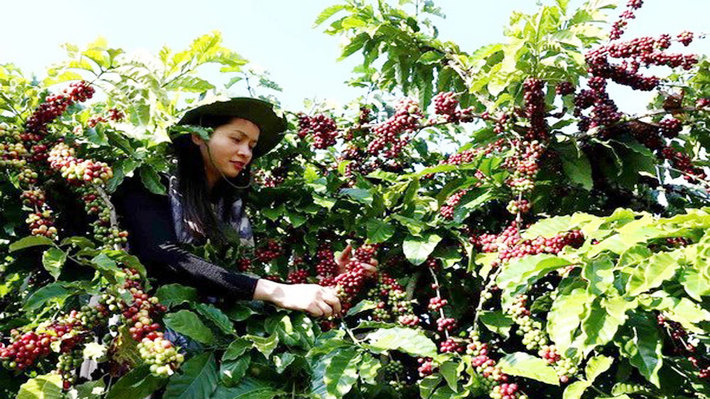 250 brands to attend Coffee Expo Vietnam 2018