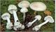 Hà Giang: Sức khỏe của 5 người bị ngộ độc nấm rừng đã cơ bản hồi phục