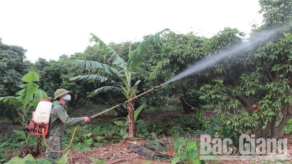 Quá tải phân bón và thuốc bảo vệ thực vật- Môi trường sống bị đe dọa: Kỳ I- Vẫn nhắm mắt làm liều