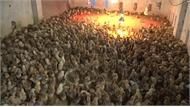 Đệm lót sinh học cải thiện môi trường chăn nuôi