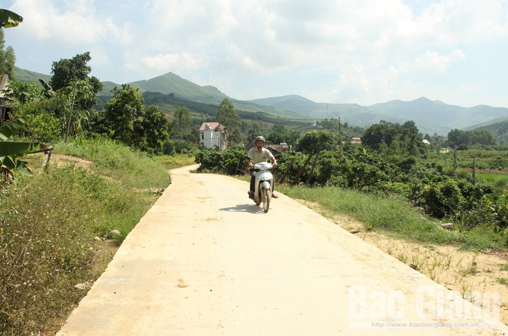 Centennial forest, green ironwood, Bac Giang province, Binh Son town, Da Huc hamlet, attractive destination, precious wood
