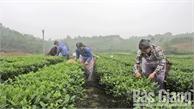 Quá tải phân bón và thuốc bảo vệ thực vật- Môi trường sống bị đe dọa: Kỳ II- Không sản xuất nông nghiệp bằng mọi giá