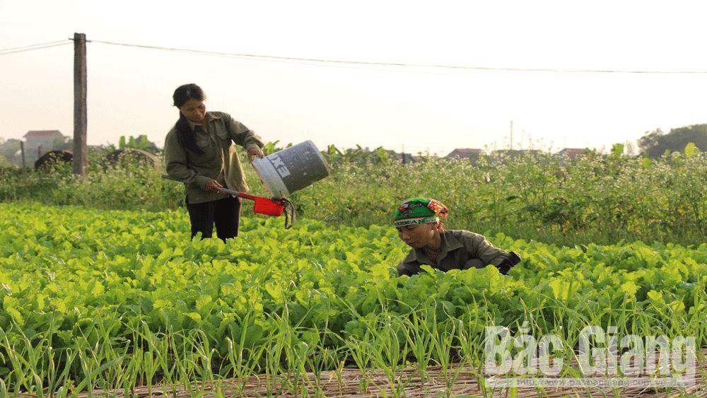 Chính sách tín dụng phục vụ nông nghiệp, nông thôn: Tiếp sức cho nông dân làm giàu