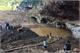 Vụ tai nạn sập hang khai thác vàng ở Hòa Bình: Tạm giữ chủ bãi khai thác vàng trái phép