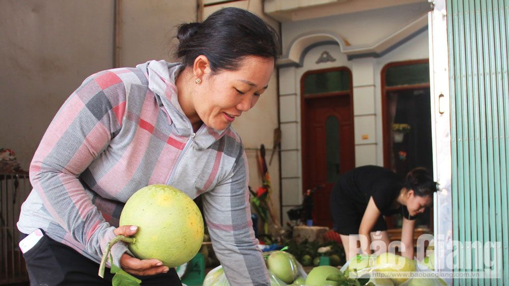 Luc Ngan fruit fair scheduled on November 24 – 29