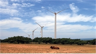 """Đến Ninh Thuận """"hóng"""" điện gió"""