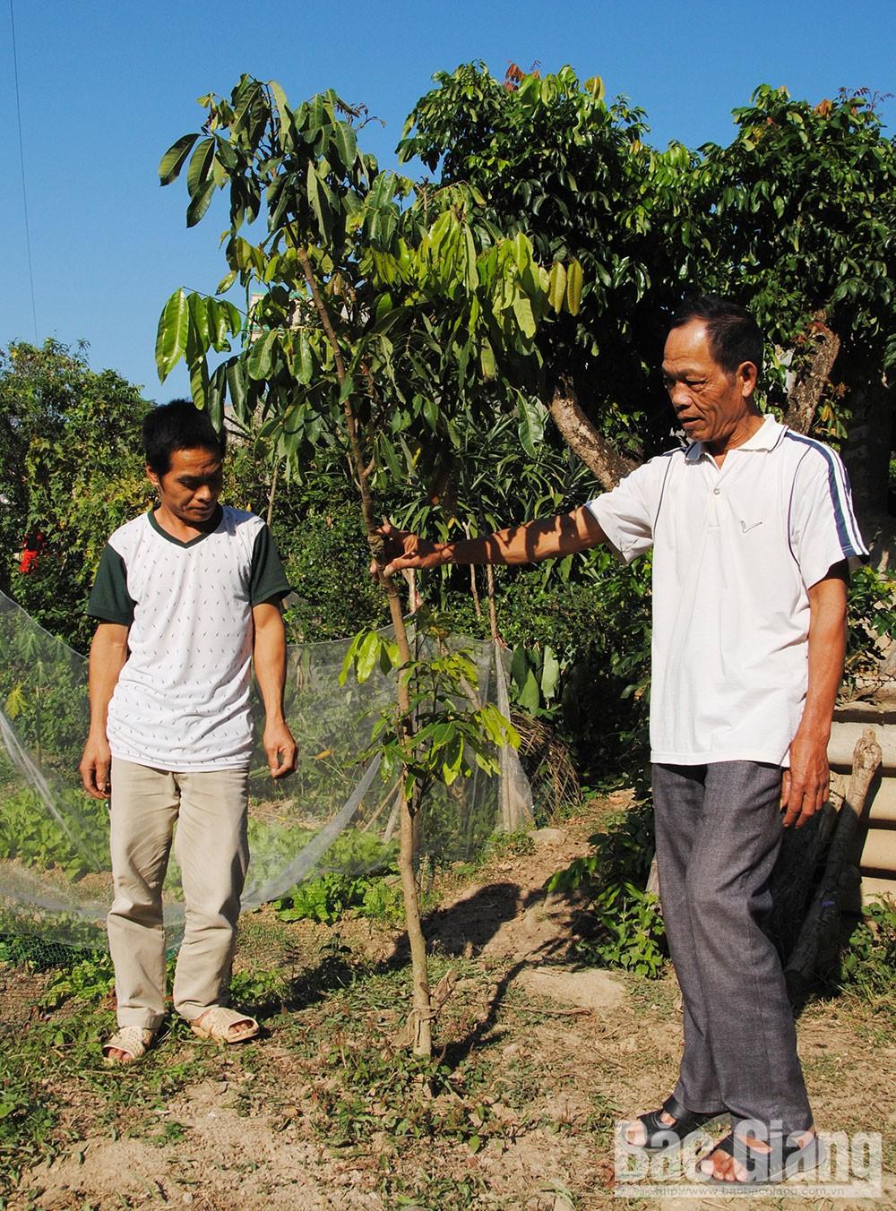 Hỗ trợ phát triển sản xuất, xã Quế Sơn, Sơn Động, cây giống
