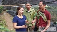 Chị Hà Thị Chanh: Nâng tầm dược liệu quê nhà