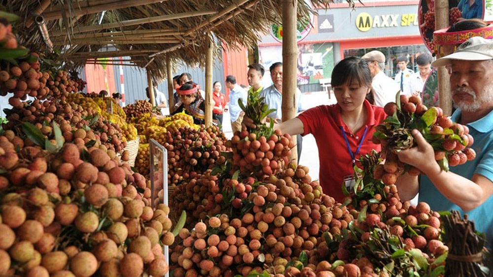 Longan and lychee season, record revenue, favorable weather conditions, effective advertisement, highest volume, year-on-year surge