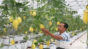Hiệp Hòa phát triển mô hình sản xuất nông nghiệp công nghệ cao