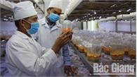 Phát triển nghề trồng nấm: Lựa chọn giống mới, giá trị cao