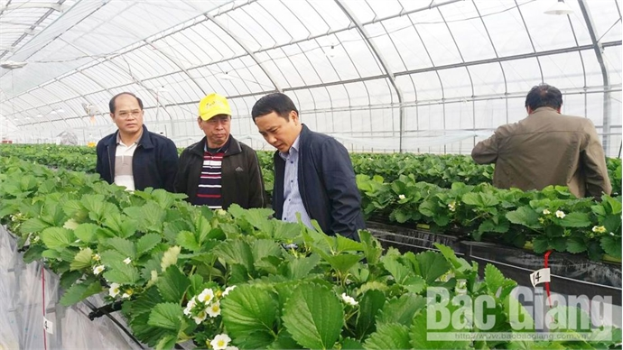 Hiep Hoa district boosts experience exchange with Gifu prefecture in high-tech agricultural production