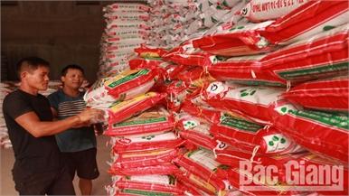 Bắc Giang: Giá phân bón tăng cao