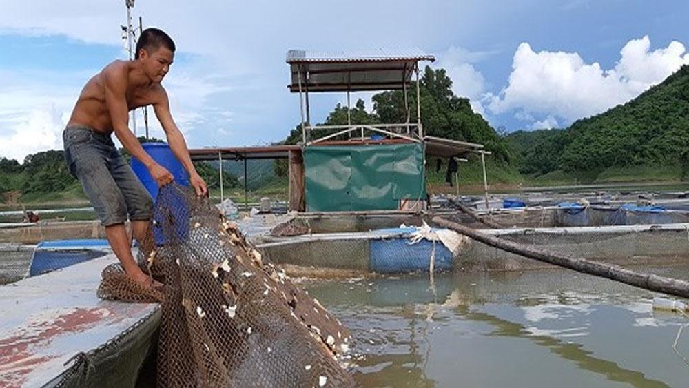 Cho cá ăn tỏi, chữa được 2 bệnh, thu hàng trăm triệu đồng
