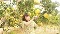 Tập trung chuẩn bị Hội chợ cam, bưởi và các sản phẩm đặc trưng huyện Lục Ngạn năm 2018