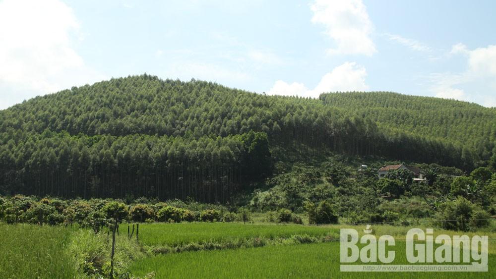 Diện tích trồng rừng tăng 38,8%