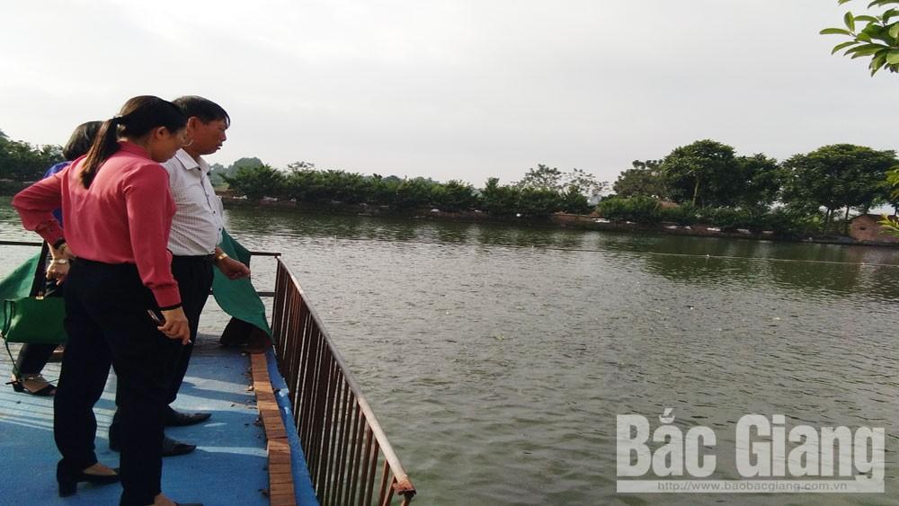 Nghiệm thu mô hình nuôi cá chép thương phẩm tiêu chuẩn VietGAP