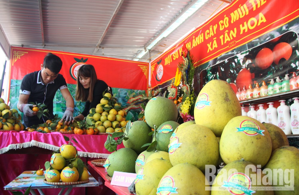 Sẵn sàng khai mạc Hội chợ cam, bưởi Lục Ngạn