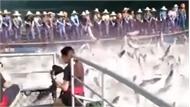 Hàng trăm con cá nhảy khỏi mặt nước khiến người xem thích thú
