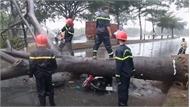 Cây đổ đè người đi đường tử vong ở TP Hồ Chí Minh