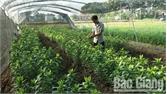 Trồng hoa thu hơn 300 triệu đồng mỗi năm