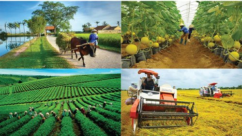 """Nghị quyết """"tam nông"""" tạo đà phát triển nông nghiệp bền vững"""