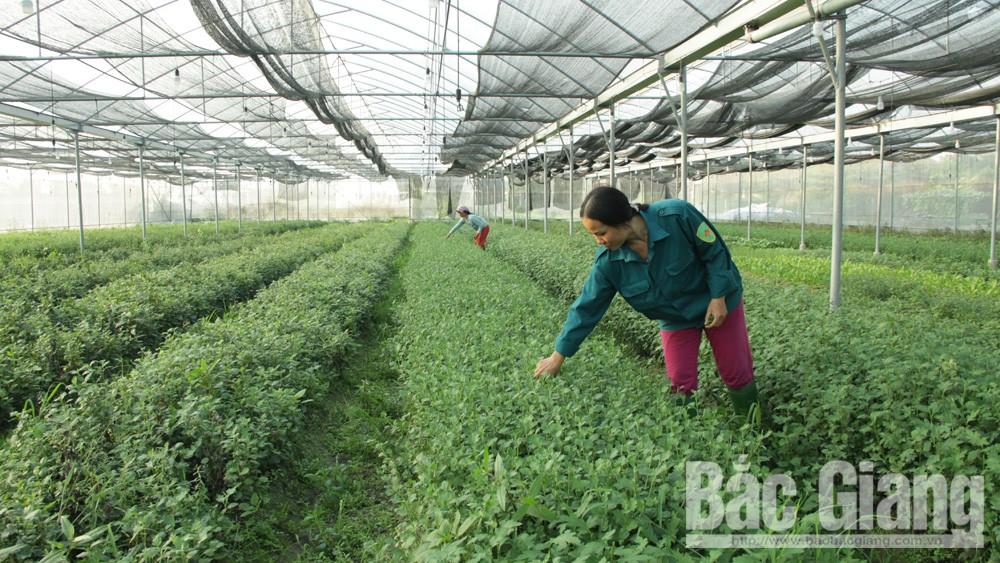Nhiều mô hình ứng dụng công nghệ cao trong nông nghiệp