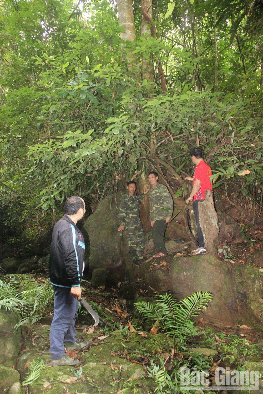 Khu bảo tồn thiên nhiên Khe Rỗ, xã An Lạc, huyện Sơn Động, rùng Khe Rỗ, Tây Yên Tử, chè cổ thụ,
