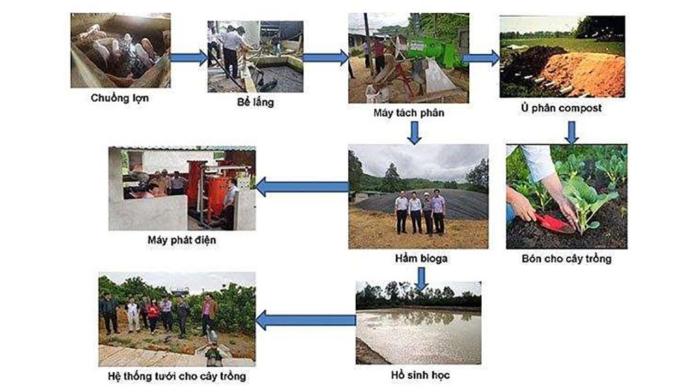 Dự án LCASP: Kết nối tín dụng đầu tư xử lý chất thải chăn nuôi
