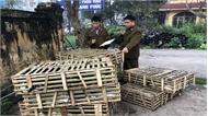 Bắt giữ gần 1 tấn mèo từ Trung Quốc