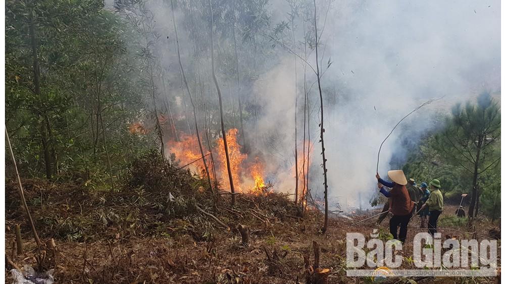 TP Bắc Giang diễn tập phòng cháy, chữa cháy rừng
