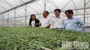 Hiệp Hòa có 15.605 hộ nông dân sản xuất, kinh doanh giỏi