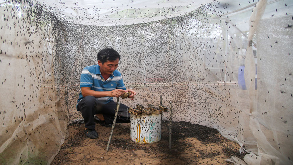 Flies become a cash cow for Mekong Delta farmer