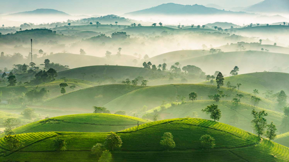 Stuff of dreams: stunning vistas of Long Coc tea hills