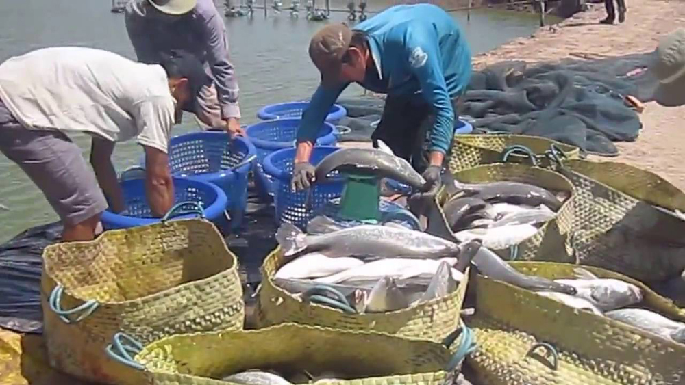 Huyện Lục Nam, nuôi thủy sản, sản lượng thủy sản tăng