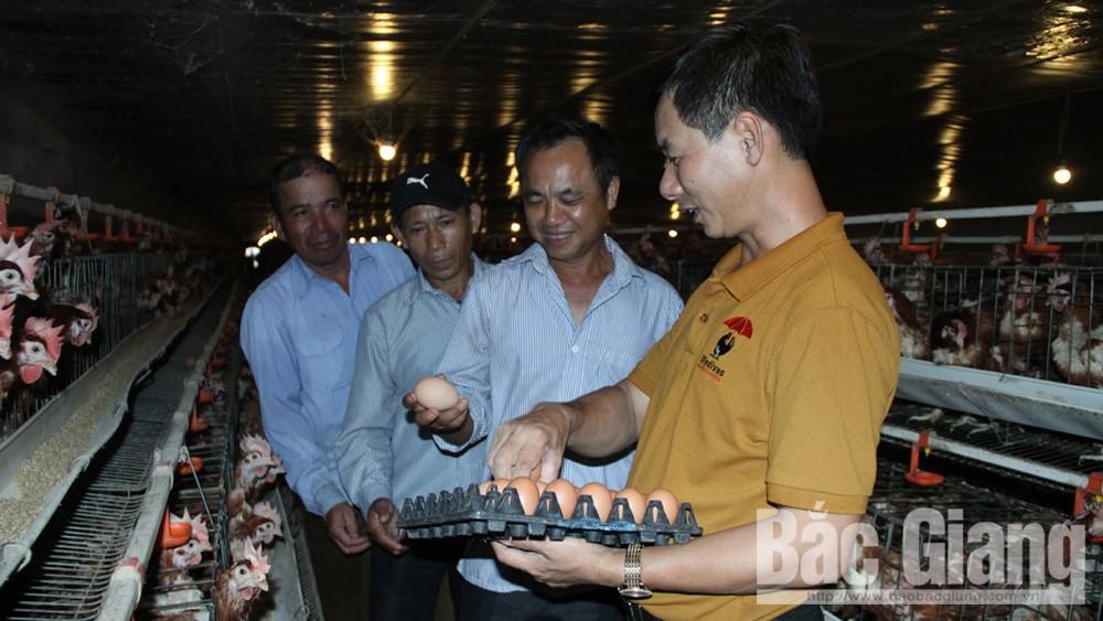 Lục Nam có 14.435 hộ nông dân sản xuất, kinh doanh giỏi