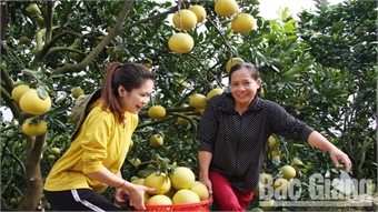 Over 17,800 tonnes of Luc Ngan's orange and pomelo sold with increased price