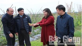 Chủ tịch UBND tỉnh Nguyễn Văn Linh: Quan tâm hỗ trợ hạ tầng, mở rộng vùng nguyên liệu cho doanh nghiệp chế biến