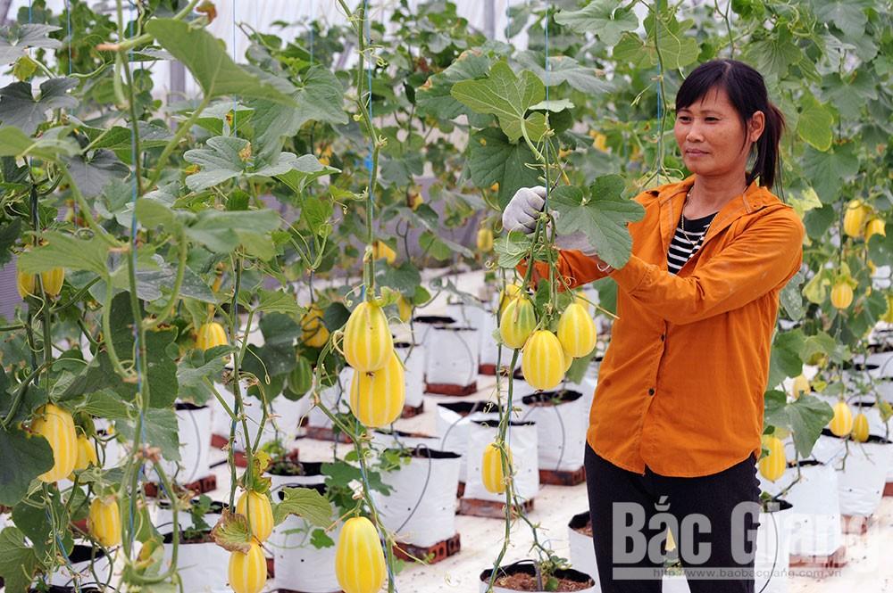Bước ngoặt cuộc đời, Lê Công Định, nông nghiệp công nghệ cao, công nghệ Isarel, thủy canh