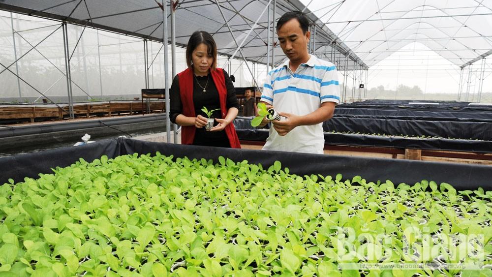 Thành công từ sản xuất nông nghiệp công nghệ cao theo chuỗi