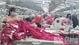 Doanh nghiệp xuất khẩu Bắc Giang: Vững đà tăng trưởng