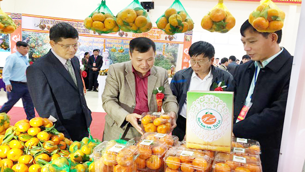 Tangerine variety in Hoa Binh granted collective trademark