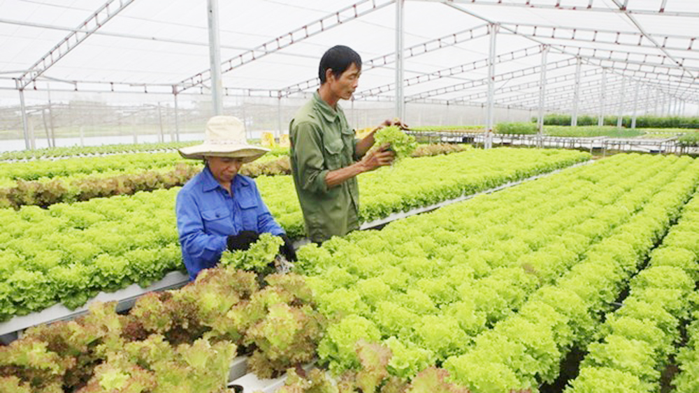 Vietnam works to boost organic farming