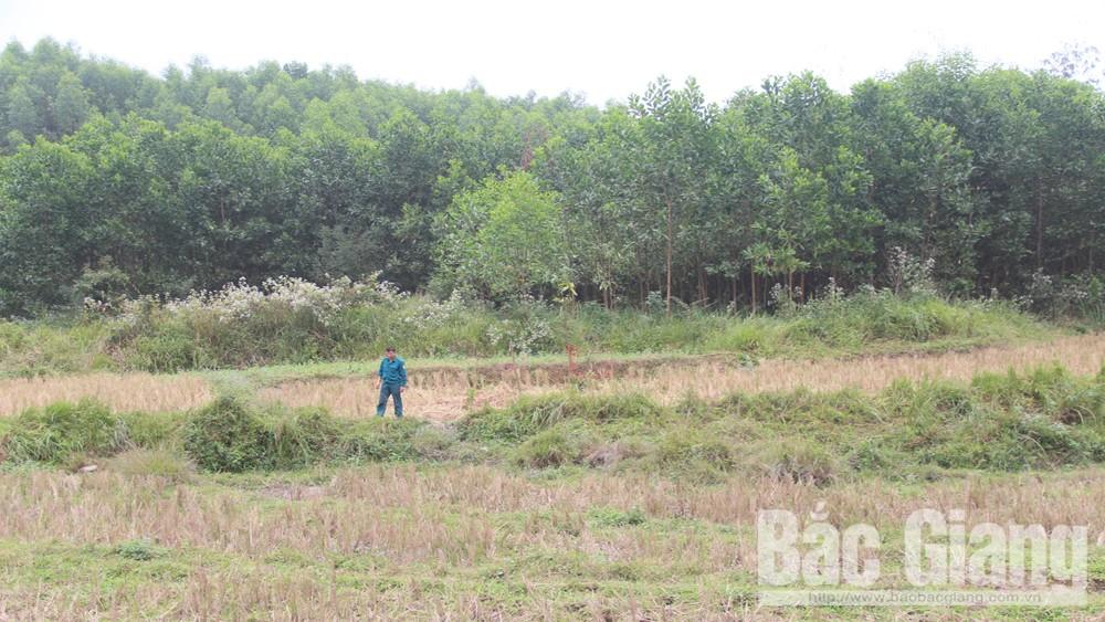 Sơn Động: Phát hiện quả bom tại thị trấn Thanh Sơn